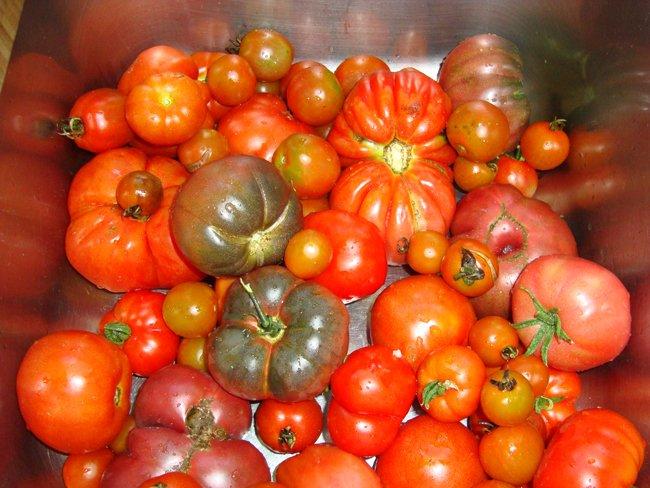 Tomatensaus in bokalen met schroefdeksel 1