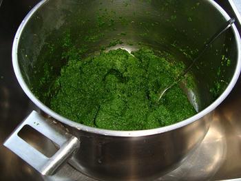 Krulkool, kale of boerenkool diepvriezen 6