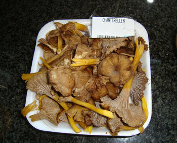 Romige bospaddenstoelensoep 4