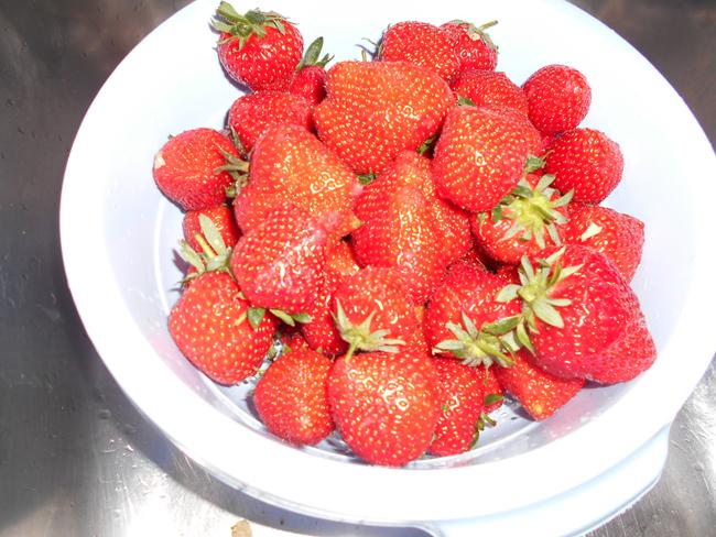 Rabarber- aardbeienconfituur 1